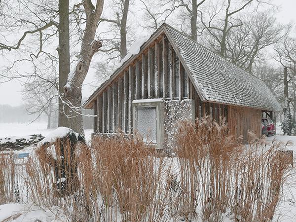 Zestien Eiken in de sneeuw